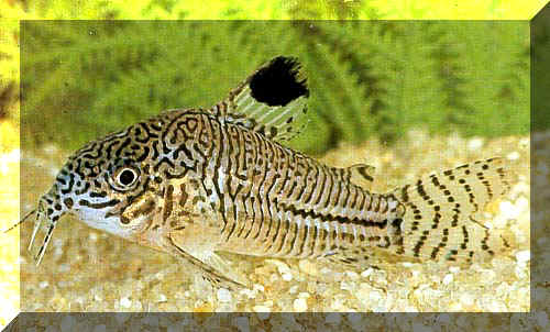 Seite 2 for Welche fische passen zu kois